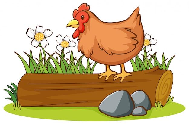 Odosobniony obrazek kurczak na beli