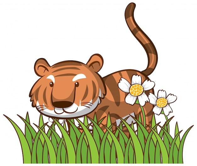 Odosobniony obrazek śliczny tygrys