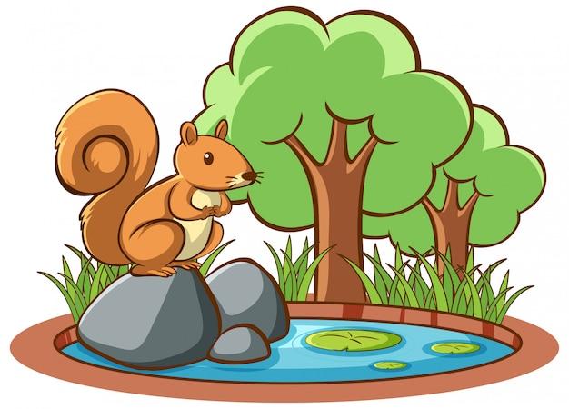 Odosobniony obrazek wiewiórka w ogródzie