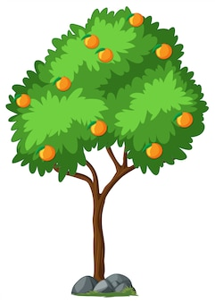 Odosobniony pomarańczowy drzewo na białym tle