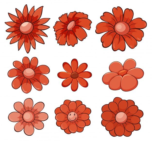 Odosobniony set kwiaty w czerwieni