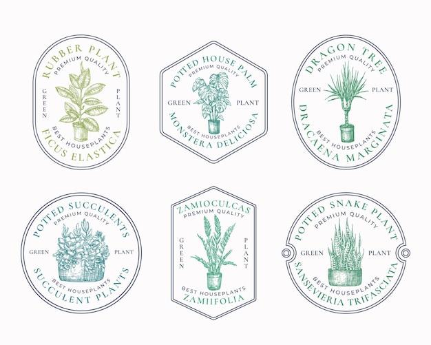 Odznaki roślin doniczkowych lub szablon logo