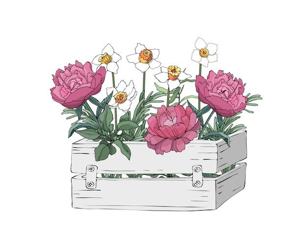 Ogrodowe drewniane jasnoszare pudełko z wiosennymi kwiatami i świeżymi ziołami do gotowania