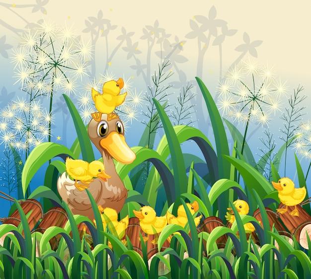 Ogrodowy sceny tło z kaczką i kaczątkami