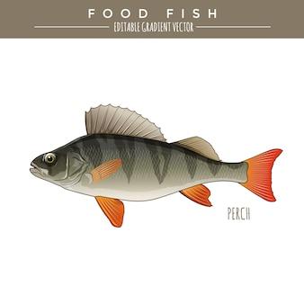 Okoń, jedzenie ryb. wektor
