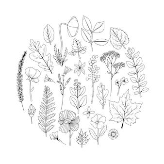 Okrągła rama z suszonymi liśćmi i kwiatami do zielnika. grafika liniowa