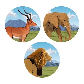 Okrągłe ramki z zestawu afrykańskiego krajobrazu z dzikich zwierząt