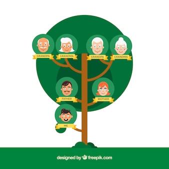 Okrągły drzewo genealogiczne w płaskiej konstrukcji