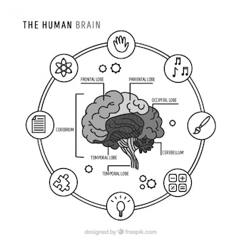 Okrągły infografika ludzkiego mózgu