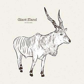 Olbrzymi eland, ręcznie rysowany szkic