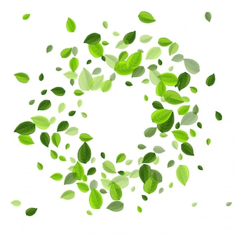 Olive greens fly branch. organiczne liście