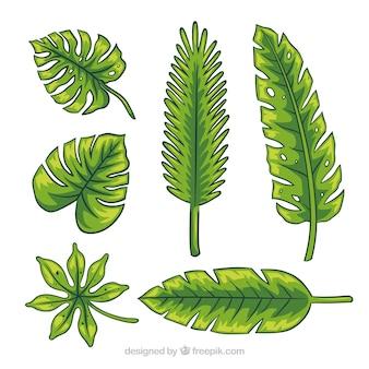 Opakowanie ręcznie rysowanych liści palmowych