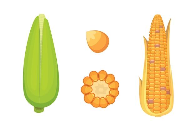 Organiczna kukurydza na białym tle