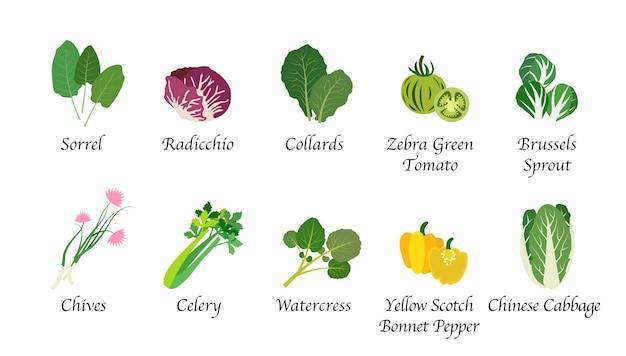 Organiczna natura zdrowa żywność warzywna przyprawa na białym tle kolekcja