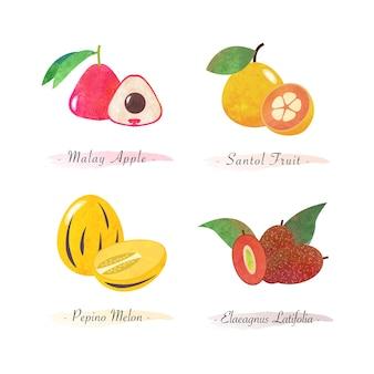 Organiczna zdrowa żywność owoce malajski jabłko santol owoce pepino melon elaeagnus latifolia