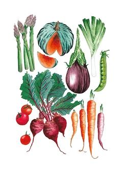 Organiczne zdrowe warzywa zestaw ilustracji akwarela