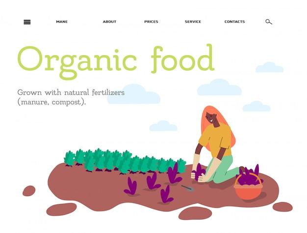 Organiczny czysty rolnik żywności transparent szablon szkic ilustracji na białym tle.