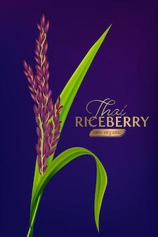 Organiczny ryż niełuskany