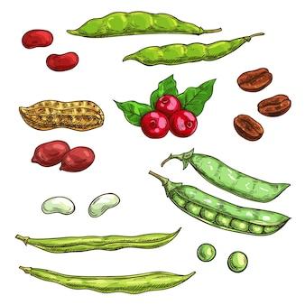 Orzechy, jądra i jagody na białym tle. elementy szkicu wektor roślin nasiona, ziarna kawy, strąk grochu, fasola, jagody, żurawina