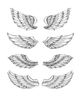 Orzeł ptak skrzydło ręcznie rysowane na białym tle zestaw