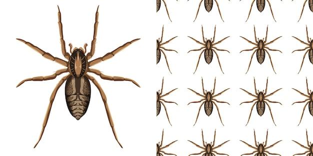 Owady pająk na białym tle na białym tle i bez szwu