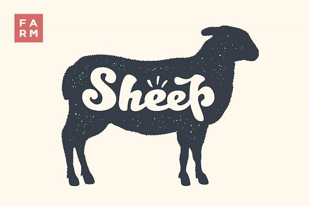 Owca. napis, typografia. zwierzęcy owca lub jagnię z silhoutte i napisem owca. kreatywna grafika dla sklepu mięsnego, targu rolniczego. vintage plakat na temat związany z mięsem. ilustracja