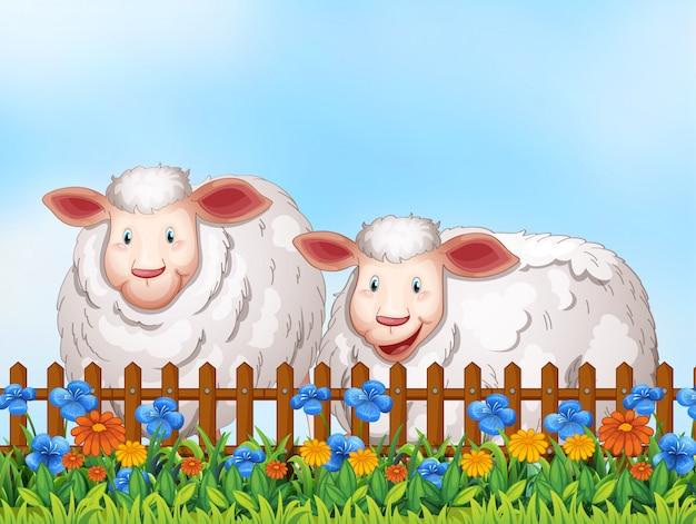 Owce w ogrodzie
