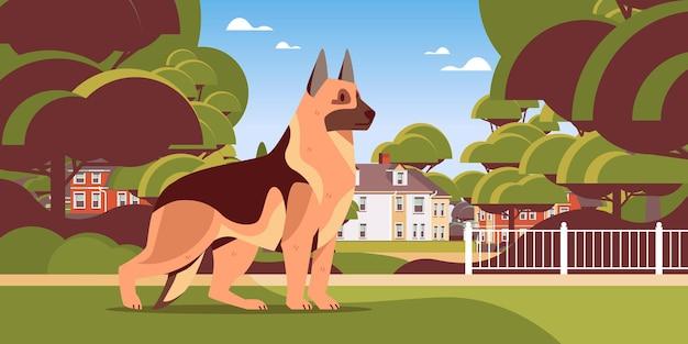 Owczarek niemiecki spacerujący na zewnątrz ładny pies futrzany ludzki przyjaciel koncepcja zwierząt domowych