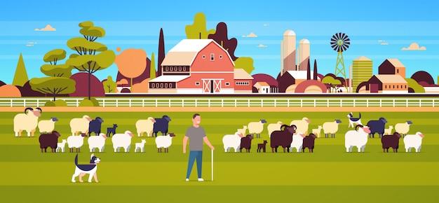 Owczarek z patykiem i psem pasterskim stado czarnych owiec mężczyzna rolnik hodowla owiec wełna zagroda pole pole krajobraz wiejski