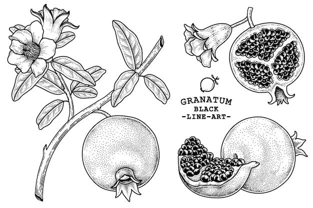 Owoc granatu ręcznie rysowane retro ilustracja