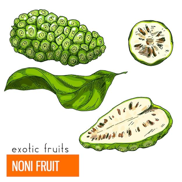 Owoc noni. kolor ilustracji wektorowych.