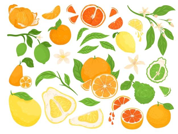 Owoce cytrusowe, cytryna, pomarańcza, grejpfruty i limonka zestaw ilustracji na białym tle z zielonymi liśćmi. zdrowe, świeże owocowe cytrusy tropikalne z połówkami i pokrojone w plasterki dla diety i witamin.