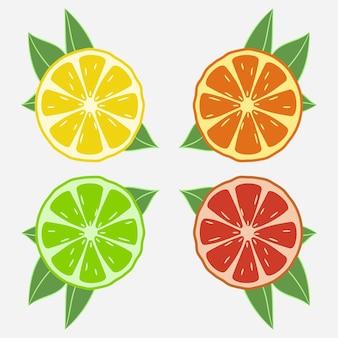 Owoce cytrusowe z liściem. pomarańcza, limonka, cytryna, grejpfrut. ilustracja wektorowa.
