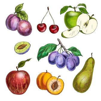 Owoce ogrodowe z liśćmi i gałęziami. wiśnia, jabłka, gruszka, śliwki, morele.