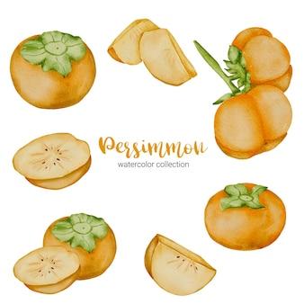 Owoce persymony w kolekcji akwarelowej, pełne owoców i pokrojone na kawałki