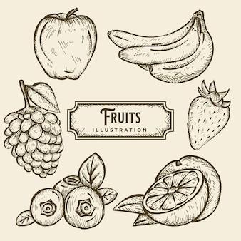 Owoce szkic ilustracji