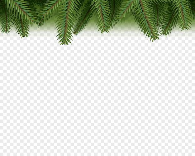 Ozdoby świąteczne. zimozielone gałęzie sosny na przezroczystym tle