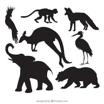 Paczka dzikich zwierząt sylwetką