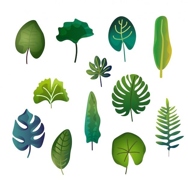 Paczka liści ilustracji wektorowych