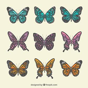 Paczka motyli z szarej grubości