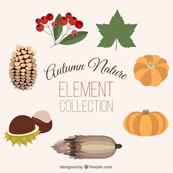 Paczka pięknych naturalnych elementów jesienią