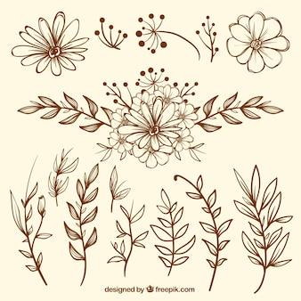 Paczka starych szkiców kwiatowych