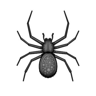 Pająk czarny pajęczak na białym tle.