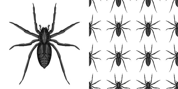 Pająk owad na białym tle i wzór