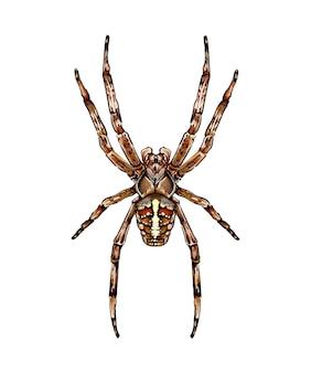 Pająk pająk ogrodowy araneus rodzaj pająka z rodziny pająków kula pająki kolorowy rysunek