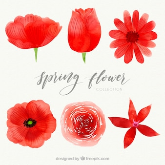 Pakiet akwarela czerwony kwiat wiosny