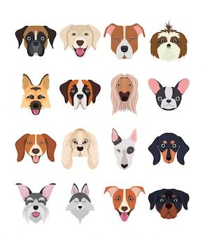 Pakiet grupy ras psów