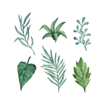 Pakiet kolekcji liści akwareli