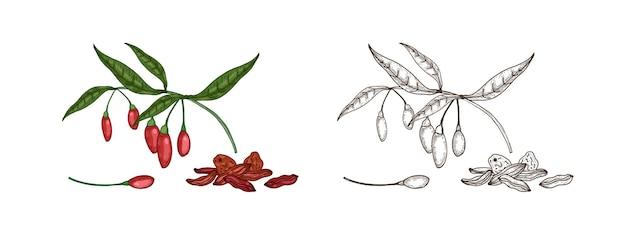 Pakiet kolorowych i monochromatycznych rysunków świeżych i suszonych jagód goji