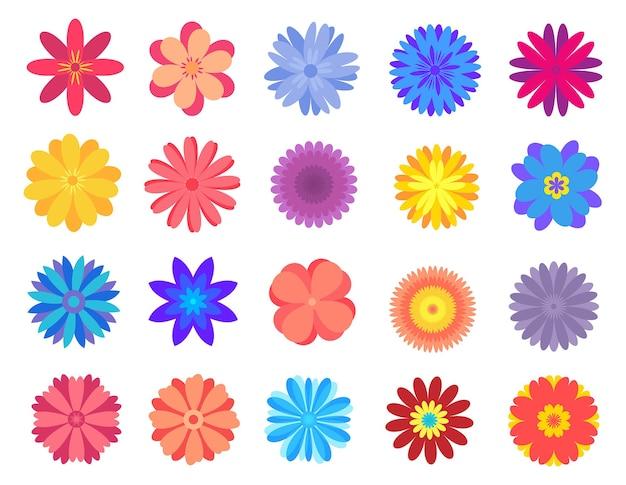 Pakiet kolorowych kwiatów